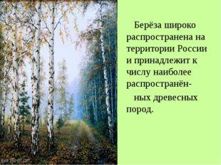 Берёза широко распространена на территории России и принадлежит к числу наиб