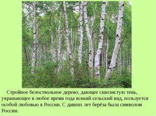 Стройное белоствольное дерево, дающее сквозистую тень, украшающее в любое вр