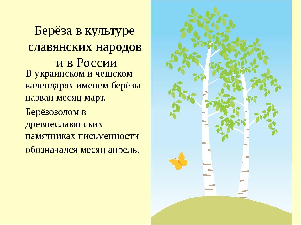 Берёза в культуре славянских народов и в России В украинском и чешском календ...