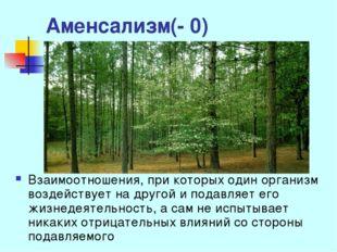 Аменсализм(- 0) Взаимоотношения, при которых один организм воздействует на др