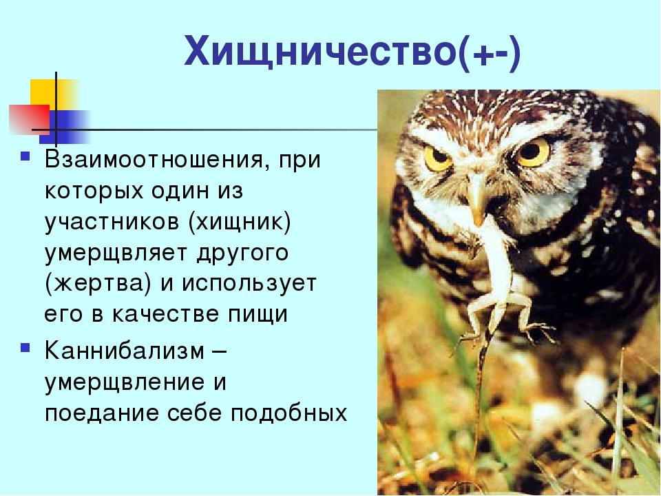 Хищничество(+-) Взаимоотношения, при которых один из участников (хищник) умер...