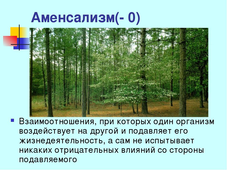 Аменсализм(- 0) Взаимоотношения, при которых один организм воздействует на др...