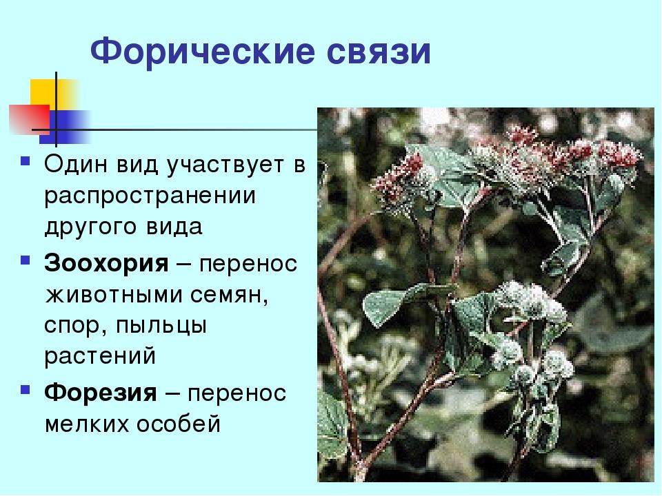Форические связи Один вид участвует в распространении другого вида Зоохория –...