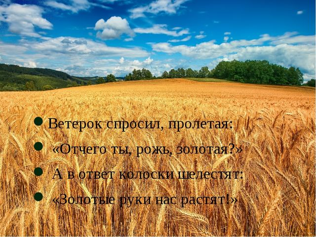 Ветерок спросил, пролетая: «Отчего ты, рожь, золотая?» А в ответ колоски шел...