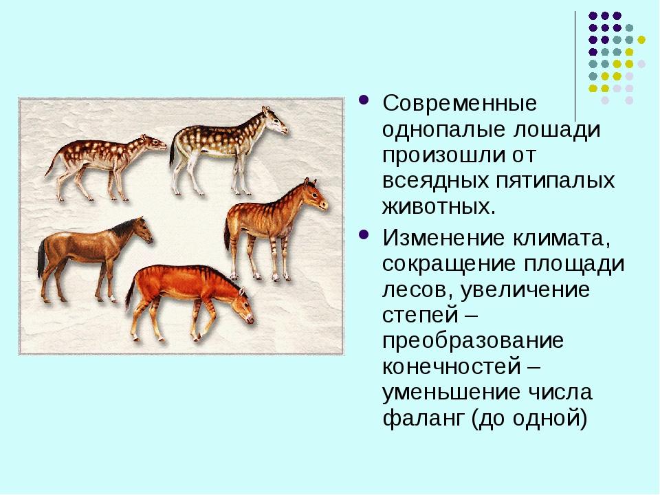 Современные однопалые лошади произошли от всеядных пятипалых животных. Измене...