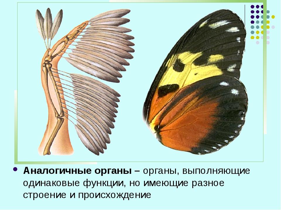 Аналогичные органы – органы, выполняющие одинаковые функции, но имеющие разно...