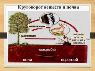 Круговорот веществ и почва соли микробы перегной животные растения Мёртвые ос