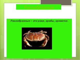 Ракообразные Ракообразные – это раки, крабы, креветки.