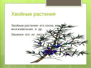 Хвойные растения Хвойные растения- это сосна, ель, можжевельник и др. Хвоинки