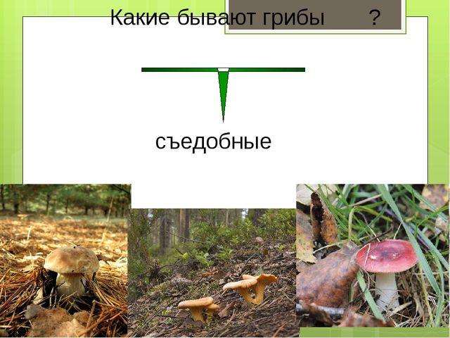 Какие бывают грибы ? съедобные