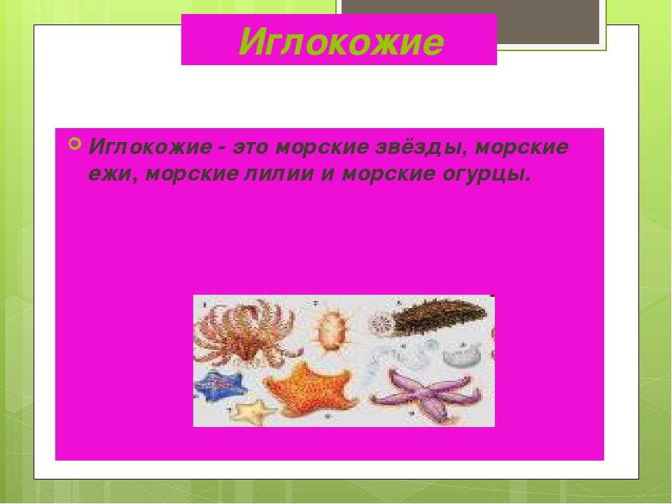 Иглокожие Иглокожие - это морские звёзды, морские ежи, морские лилии и морски...