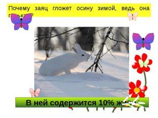 В ней содержится 10% жира. Почему заяц гложет осину зимой, ведь она горькая?