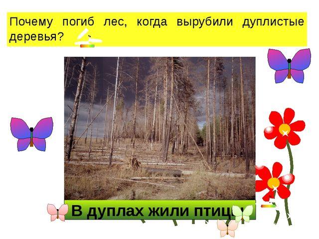 В дуплах жили птицы. Почему погиб лес, когда вырубили дуплистые деревья?
