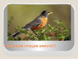 Поможем птицам вместе!!!