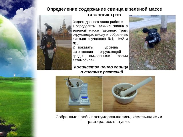 Определение содержание свинца в зеленой массе газонных трав Количество ионов...