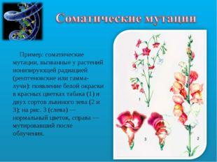 Пример: соматические мутации, вызванные у растений ионизирующей радиацией (р