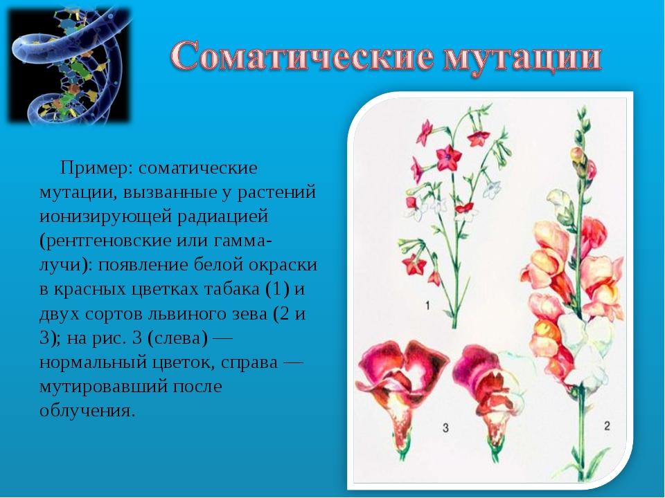 Пример: соматические мутации, вызванные у растений ионизирующей радиацией (р...