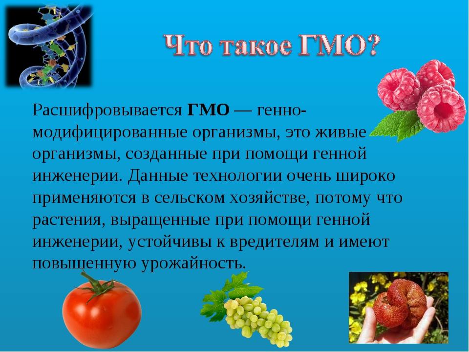 Расшифровывается ГМО — генно-модифицированные организмы,это живые организмы,...