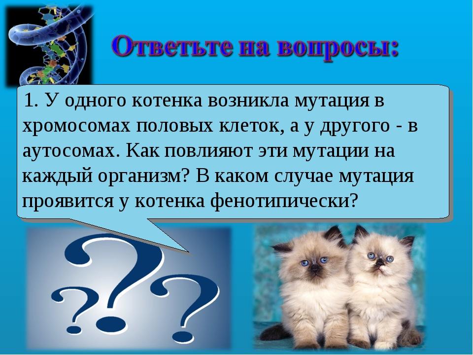 1. У одного котенка возникла мутация в хромосомах половых клеток, а у другого...