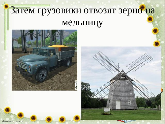 Затем грузовики отвозят зерно на мельницу