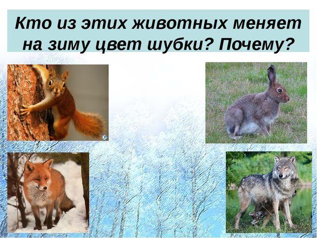 Кто из этих животных меняет на зиму цвет шубки? Почему?