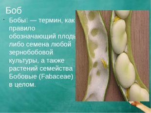 Боб Бобы́ — термин, как правило обозначающий плоды либо семена любой зернобоб