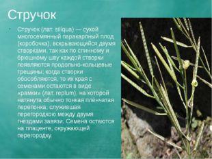 Стручок Стручок (лат. silíqua) — сухой многосемянный паракарпный плод (коробо