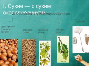 I. Сухие — с сухим околоплодником: 2. Ореховидные или односеменные орех, ореш