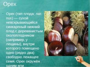 Орех Орех (тип плода; лат. nux) — сухой невскрывающийся синкарпный нижний пло