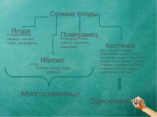 Сочные плоды Ягода Яблоко Померанец Костянка плод  (яблоня, груша, айва, ряб