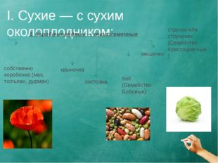 I. Сухие — с сухим околоплодником: 1. Коробочковидные — многосеменные собстве