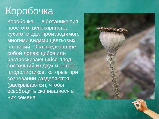 Коробочка Коробочка — в ботанике тип простого, ценокарпного, сухого плода, пр...