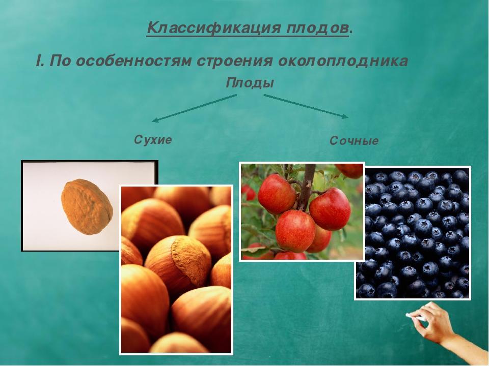 Классификация плодов. I. По особенностям строения околоплодника Плоды Сухие С...