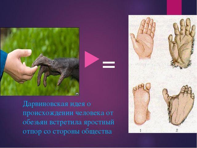 = Дарвиновская идея о происхождении человека от обезьян встретила яростный от...