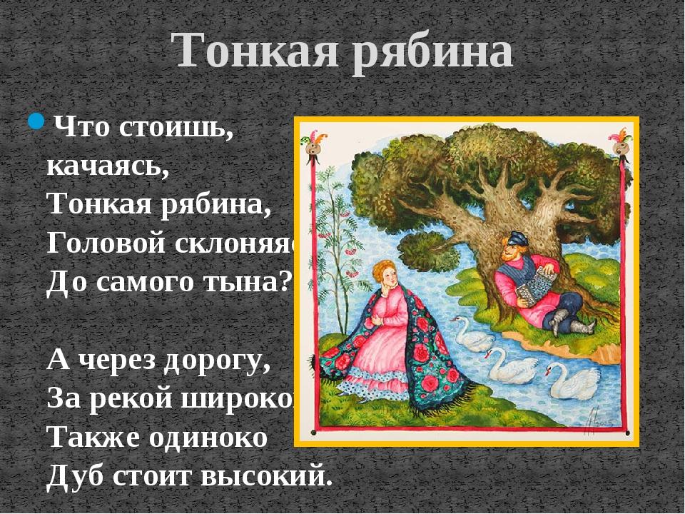 Тонкая рябина Что стоишь, качаясь, Тонкая рябина, Головой склоняясь До самого...