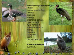 Наиболее охраняемые виды: Птицы гагара чернозобая глухарь дербник змееяд куро