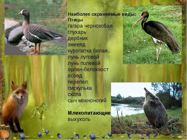 Наиболее охраняемые виды: Птицы гагара чернозобая глухарь дербник змееяд куро...
