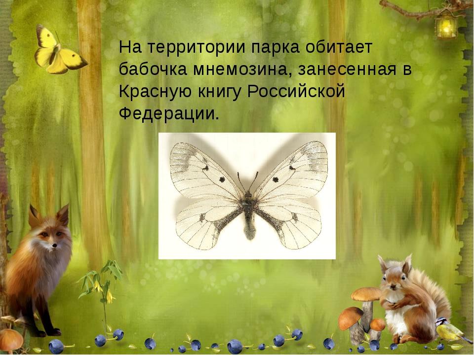 На территории парка обитает бабочка мнемозина, занесенная в Красную книгу Рос...