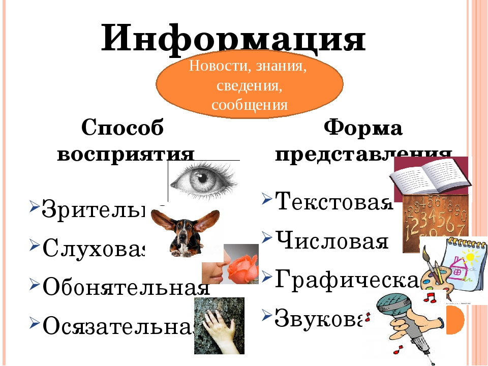Зрительная Слуховая Обонятельная Осязательная Текстовая Числовая Графическая...