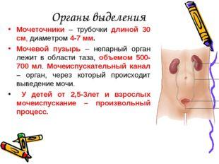 Органы выделения Мочеточники – трубочки длиной 30 см, диаметром 4-7 мм. Мочев