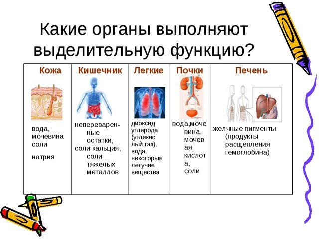 Какие органы выполняют выделительную функцию? Кожа вода, мочевина соли натрия...