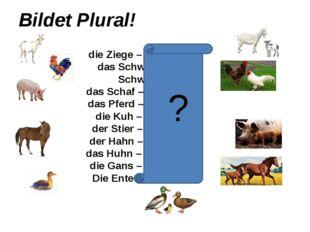 Bildet Plural! die Ziege – die Ziegen das Schwein – die Schweine das Schaf –