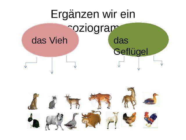 Ergänzen wir ein Assoziogramm! das Vieh das Geflügel