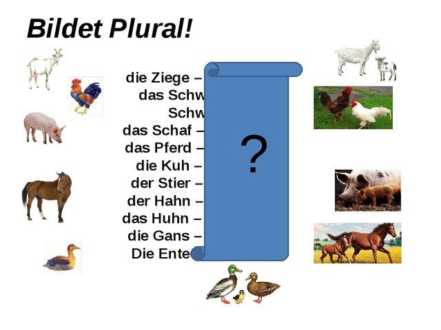 Bildet Plural! die Ziege – die Ziegen das Schwein – die Schweine das Schaf –...