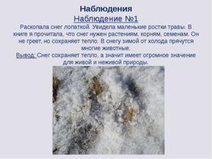 Наблюдения Наблюдение №1 Раскопала снег лопаткой. Увидела маленькие ростки тр