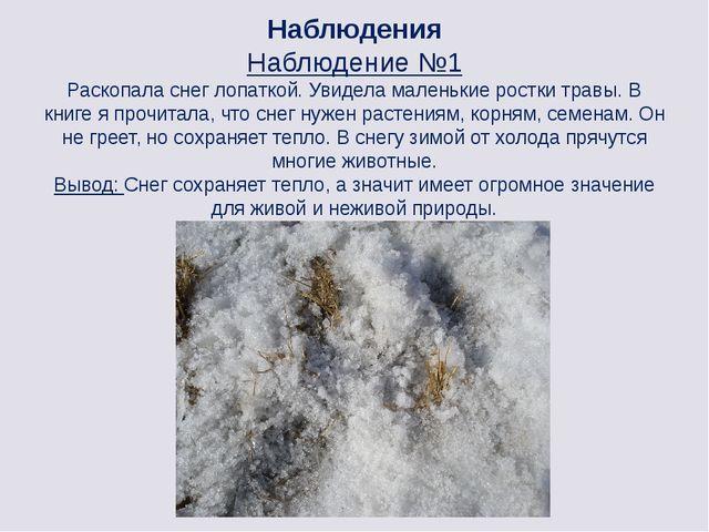 Наблюдения Наблюдение №1 Раскопала снег лопаткой. Увидела маленькие ростки тр...