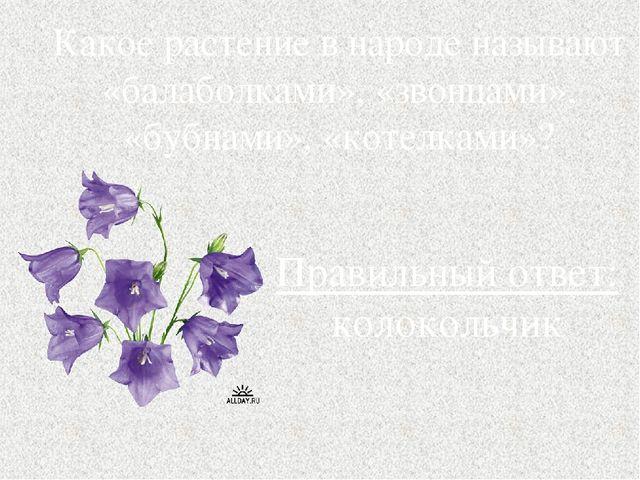 Какое растение в народе называют «балаболками», «звонцами», «бубнами», «котел...
