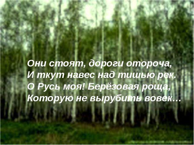 Они стоят, дороги отороча, И ткут навес над тишью рек. О Русь моя! Берёзовая...