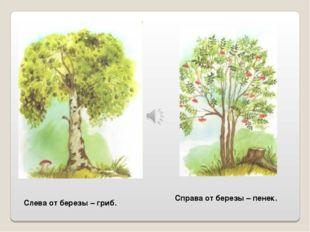 Слева от березы – гриб. Справа от березы – пенек.