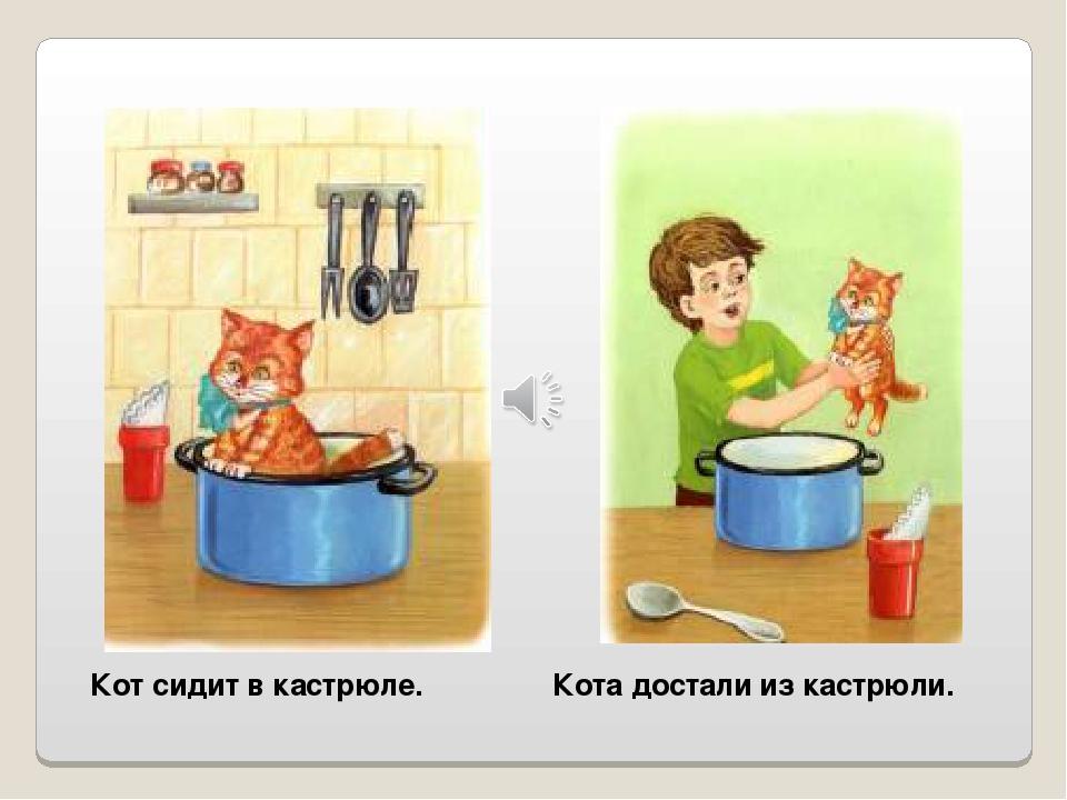 Кот сидит в кастрюле. Кота достали из кастрюли.